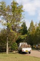 2011 10 17  山のおんぶ 搬出 076_R
