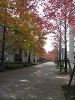 2011 11 15 城国大 風景スケッチ 005_R