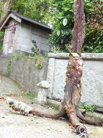 2012 6 5 彩の会 八幡岬  大原漁港 011_R