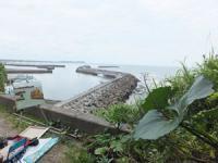 2012 6 5 彩の会 八幡岬  大原漁港 062_R