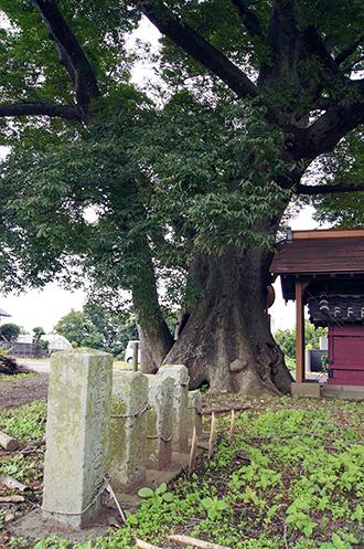 140915茨城 北山の欅⑥