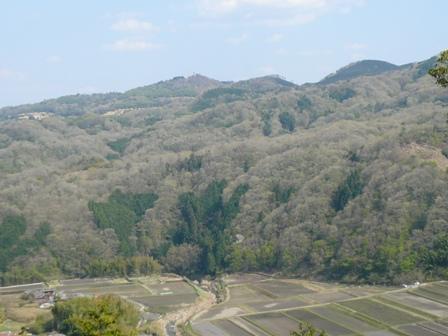 春の茶臼山