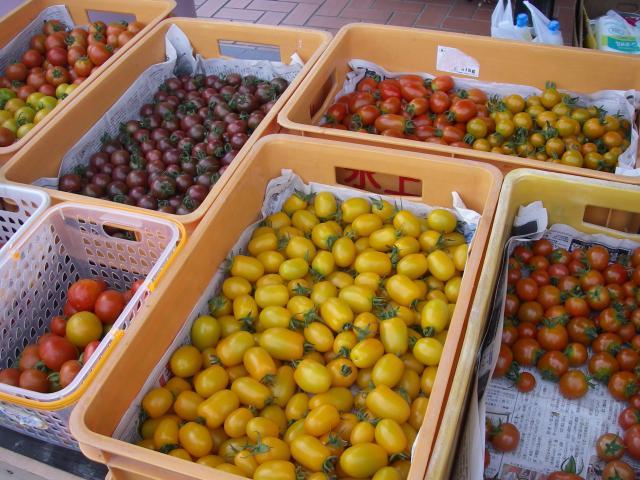 色とりどりのミニトマト