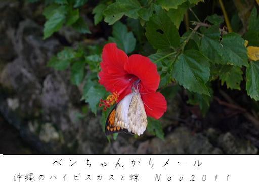 iko_.jpg