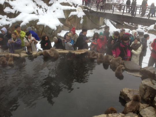 HAKUBA SNOWMONKEY daytour BOOKING