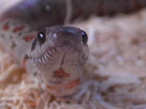 20111103_蛇2