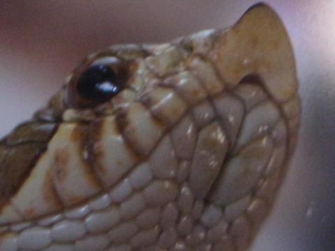 20111103_蛇3