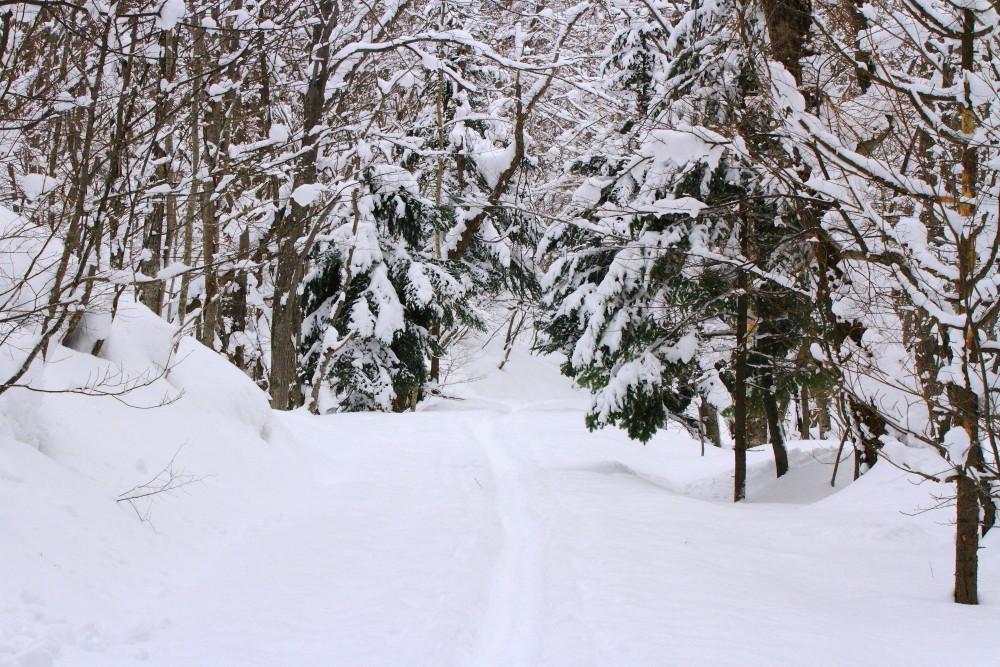 北の大地 森林公園