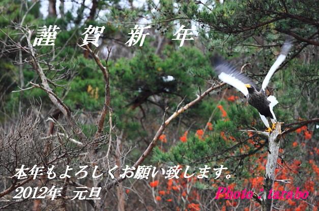 IMG_450511.jpg
