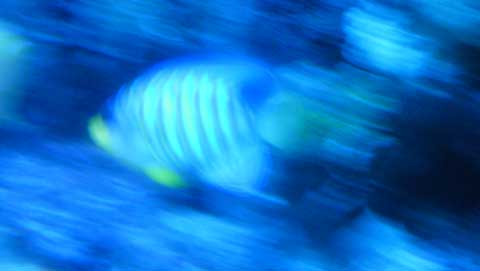 20120608nisiki.jpg
