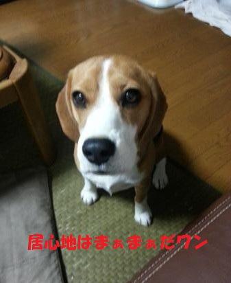 20121014_213318_convert_20121019221640.jpg