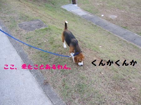 IMG_1979_convert_20111018200605.jpg