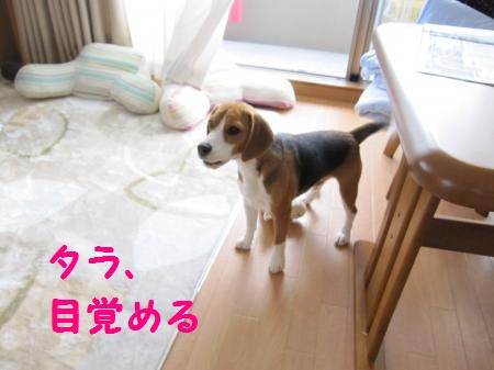 IMG_2201_convert_20111119101000.jpg