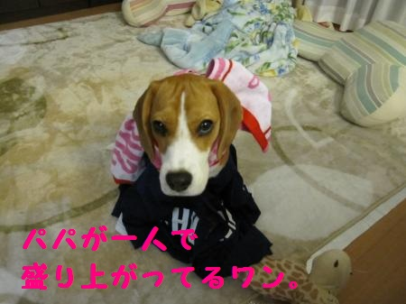 IMG_2221_convert_20111122200905.jpg