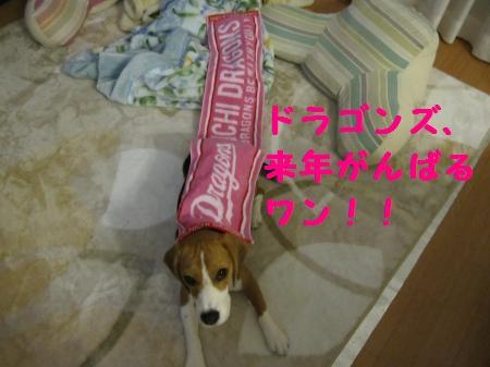 IMG_2224_convert_20111122201019.jpg