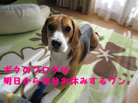 IMG_2285_convert_20111127114048.jpg