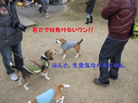 IMG_2453_convert_20111230203044.jpg