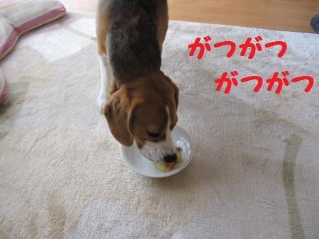 IMG_2517_convert_20120101103436.jpg