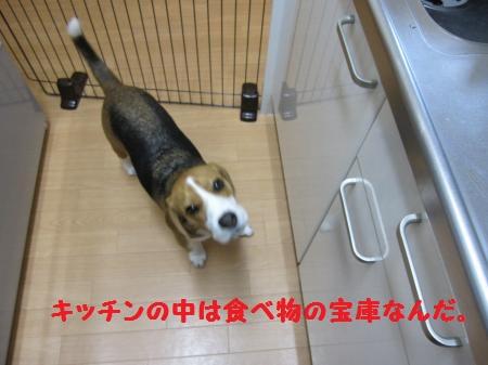 IMG_2580_convert_20120128133937.jpg