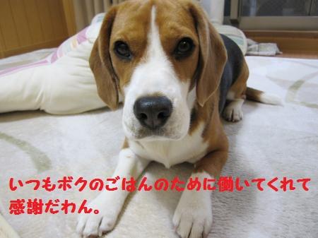IMG_2717_convert_20120305171813.jpg