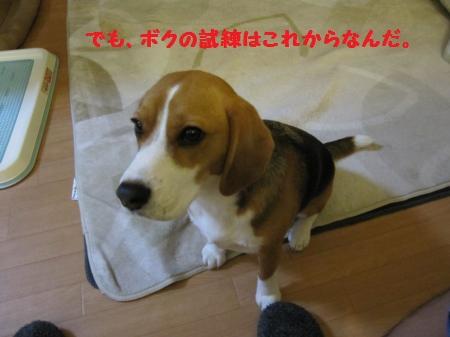 IMG_2827_convert_20120509154223.jpg