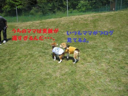 IMG_2905_convert_20120514205237.jpg