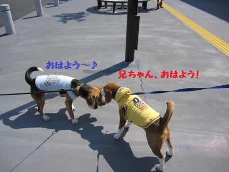 IMG_2956_convert_20120521214030_20120521215907.jpg