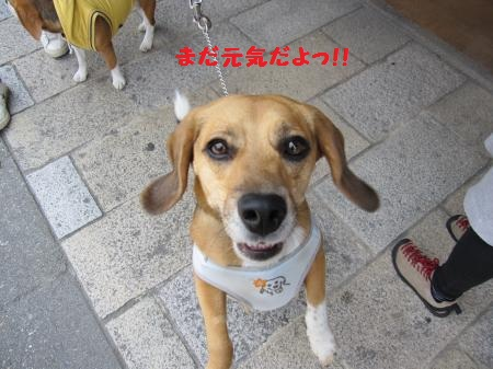 IMG_2982_convert_20120524220821.jpg