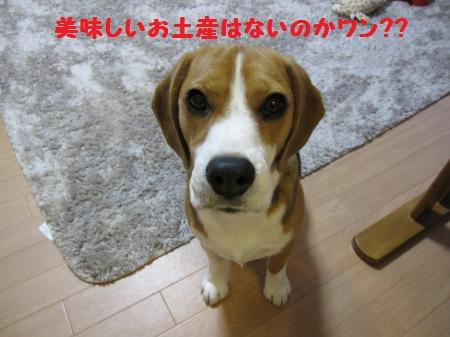 IMG_3310_convert_20120619090210.jpg