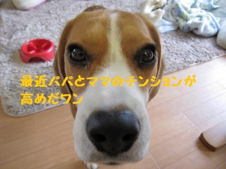 IMG_3429_convert_20120701102452_20120701104434.jpg