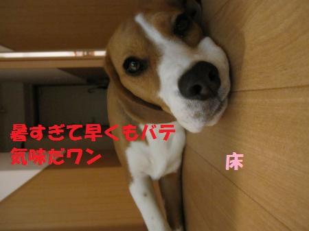 IMG_3457_convert_20120708191451.jpg