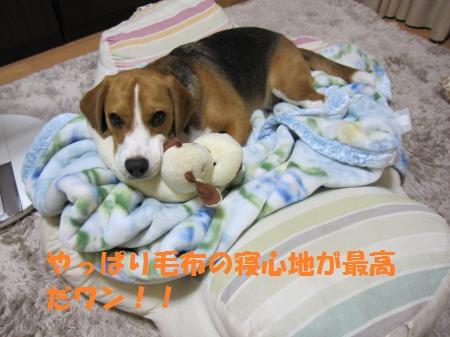 IMG_3476_convert_20120708191520.jpg