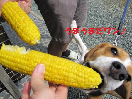 IMG_3493_convert_20120715211106.jpg