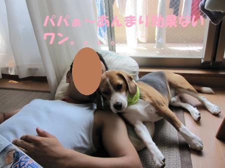IMG_3556_convert_20120729164819.jpg
