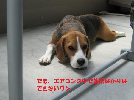 IMG_3739_convert_20120825084955.jpg