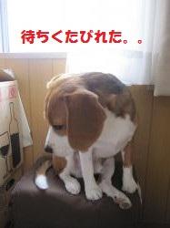 IMG_3845_convert_20120924091128.jpg