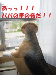 IMG_3846_convert_20120924091153.jpg