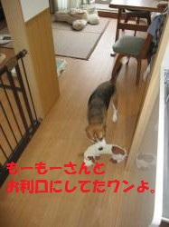 IMG_3854_convert_20120924091438.jpg