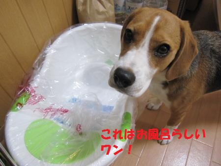IMG_3886_convert_20120930182747.jpg