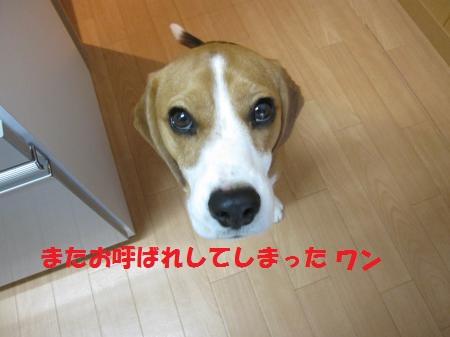 IMG_4096_convert_20121027213811_20121027215629.jpg
