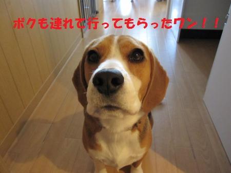 IMG_4211_convert_20121124190052.jpg