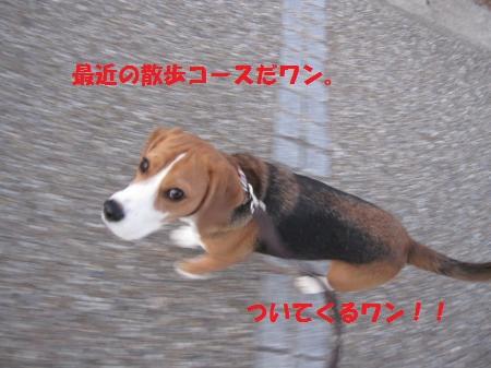 IMG_4351_convert_20121209194056.jpg