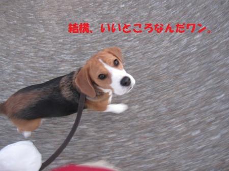IMG_4354_convert_20121209194116.jpg