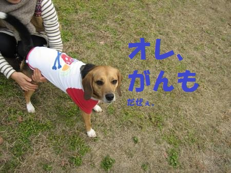 IMG_4485_convert_20121231091327.jpg