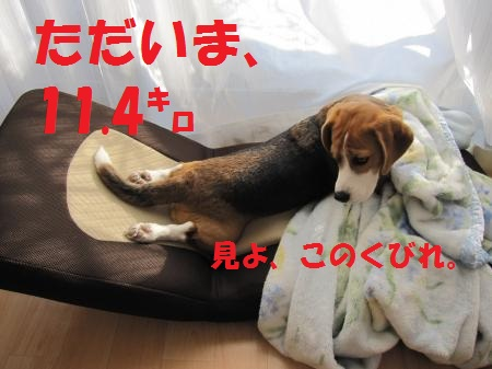 IMG_4702_convert_20130213192144.jpg