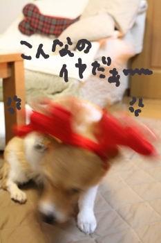 IMG_25521.jpg