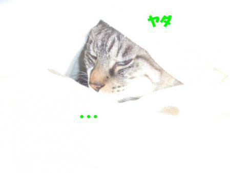 1_20121216170003.jpg
