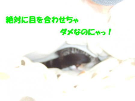 2_20121216170005.jpg
