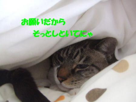 5_20121216170001.jpg