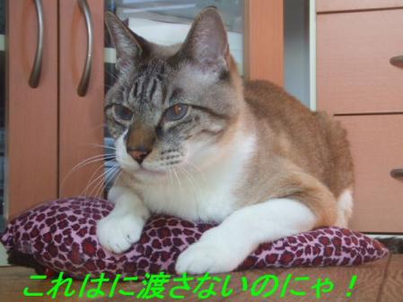 6_20111030114211.jpg